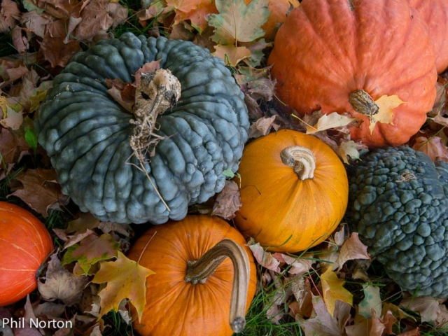 Autumn, Fall, Squash